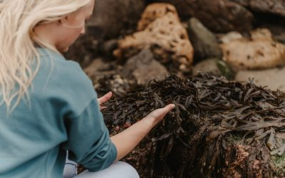 Super Seaweed and Why It's So Good for Us